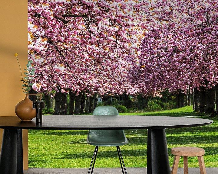 Beispiel fototapete: Kirschblüte von Frank Herrmann