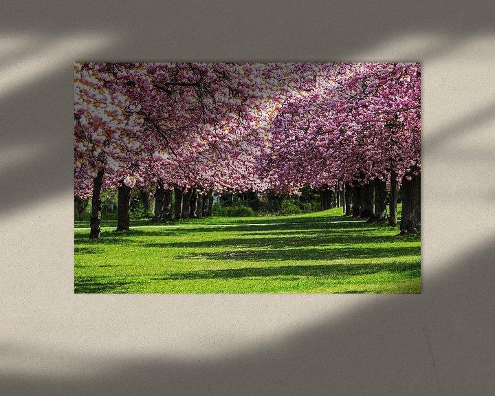 Beispiel: Kirschblüte von Frank Herrmann