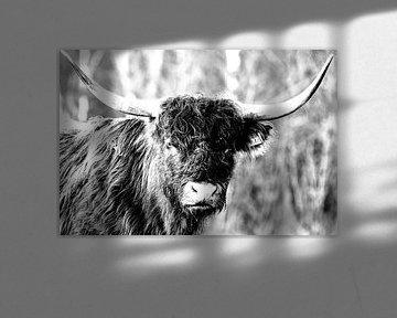 Highland cow van Bart van Mastrigt