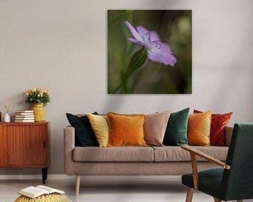 Lila Blume von Richard van der Zwan