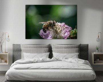 Biene auf Blüte violett von Patrick Pasicnjek