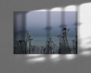 Durch die Blume von Inge Heathfield