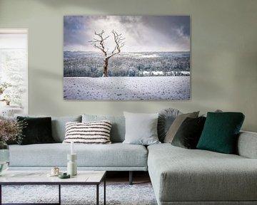 Eenzaam boompje in een dramatisch landschap