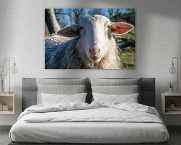 Portrait eines Schafes von Ingrid de Vos - Boom