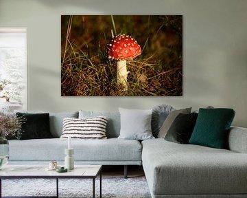 Rode paddenstoel van Tamara Van luik