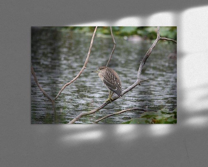 Beispiel: Verstopte Vogel von Kimberly de Pater