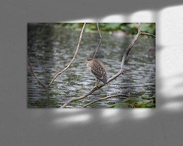 Verstopte Vogel sur Kimberly de Pater