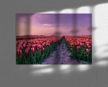 Rode tulpenveld van Marjolijn Nugteren