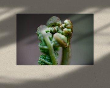 Stehende Farnpflanze Nahaufnahme, freistehend von Edith Wijte