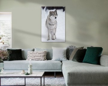 Eine strenge Wölfin steht von Michael Semenov