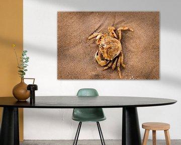 Krabbe im flachen Wasser von Anita Hermans