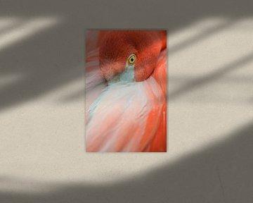 Flamingo Porträt von Elles Rijsdijk