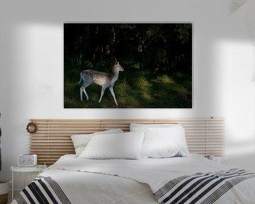 Junger Damhirsch im dunklen Wald von Elles Rijsdijk