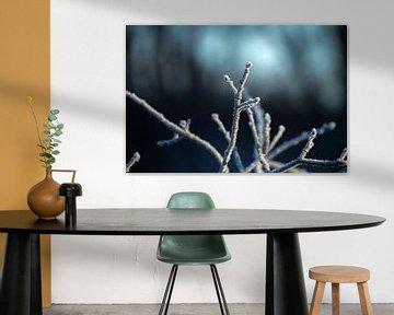 Frost Zweige von Tomas Woppenkamp