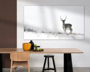 Hert in winterlandschap van Alex Pansier