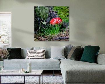 Rode paddenstoel van Wim Demortier