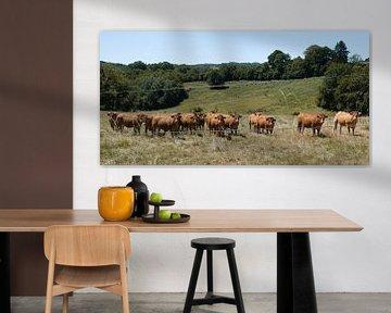 Französische Kühe von Karin vanBijleveltFotografie