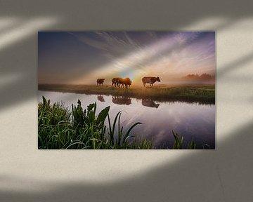 zonsopkomst in het groene hart van van Buren Fotografie