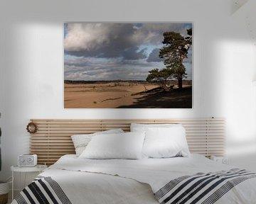 Loonse en Drunense duinen van Miranda Geerts
