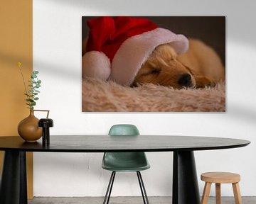 Golden Retriever Hund mit Weihnachtsmannmütze von Audrey van der Hoorn