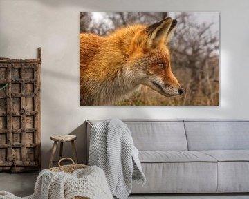 Fuchs im vollen Fokus von Audrey van der Hoorn