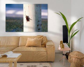 Sonnenbadende Kakerlake auf einer Stange von Peter de Kievith Fotografie
