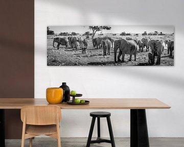 Schwarz-Weiß-Panorama einer Elefantenherde im Etosha-Nationalpark, Namibia von Rietje Bulthuis