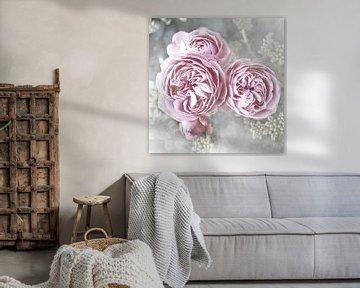 Roses Landhuis Shabby van Christine Bässler