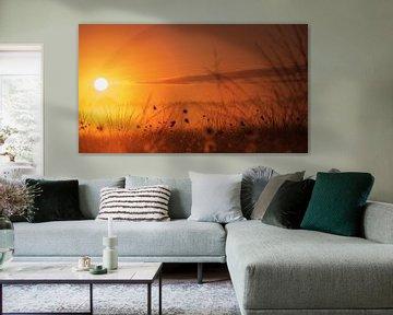 Katoengras voor zonsopgang van Kurt Krause