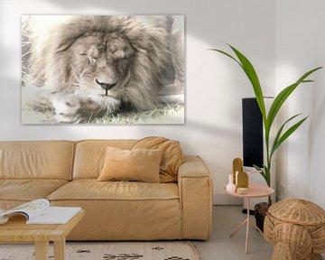 Schlafender Löwe - sanfte Farben von Michar Peppenster