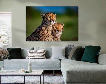 Cheetah Maleika van Peter Michel