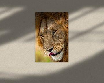 Leeuwengezicht van Peter Michel