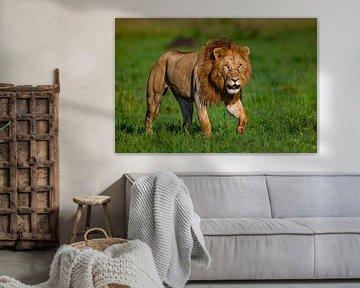 ijsberende leeuw van Peter Michel