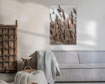 Les roseaux d'hiver. Photographie d'art. Décoration murale. Tonalités d'humeur et de terre sur Quinten van Ooijen