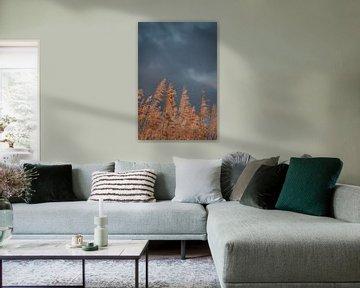 Dreigende lucht en riet. Fine art fotografie. Wanddecoratie. Moody en Aardetinten van Quinten van Ooijen