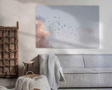 Vliegende vogels. Meeuwen. Zonsondergang. Pastelkleuren. Fine art fotografie. van Quinten van Ooijen