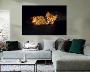 Rotes Kätzchen von Marjolijn Maljaars