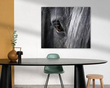 Close-up van een paardenoog van Sharon de Groot