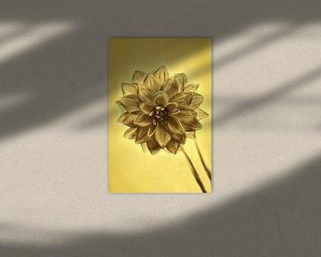 Gouden dahlia van Tot Kijk Fotografie: natuur aan de muur
