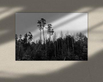 Schwedische Naturschönheit von Eveline Smolders