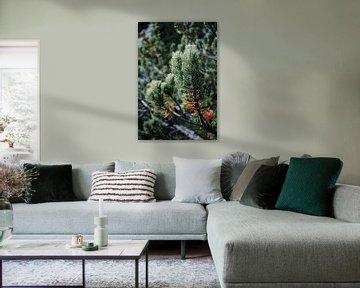 Dennenboom van Eveline Smolders