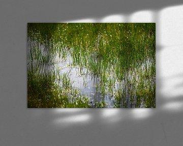 Wasserpfützen stehen auf einem Feld mit Gras von Matthias Korn