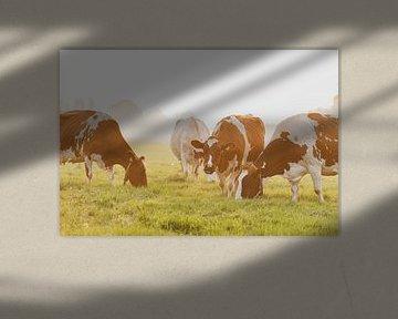 Koeien in een weiland tijdens een mistige zonsopgang in de IJsseldelta van Sjoerd van der Wal