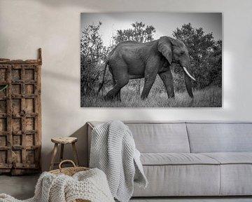 Jumbo in Kruger von Grafo