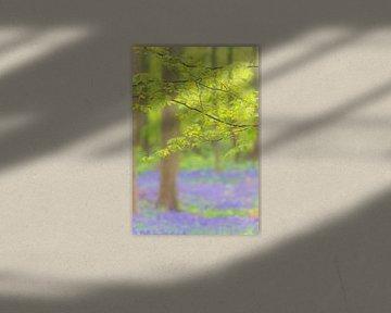 Beukenboom met frisgroene bladeren in een bos van wilde hyacinten van Sjoerd van der Wal
