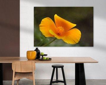 Gelbe Blume von Maarten de Jong