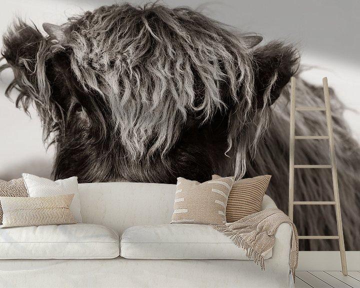 Beispiel fototapete: Junger schottischer Highlander (Sepia) von Latifa - Natuurfotografie