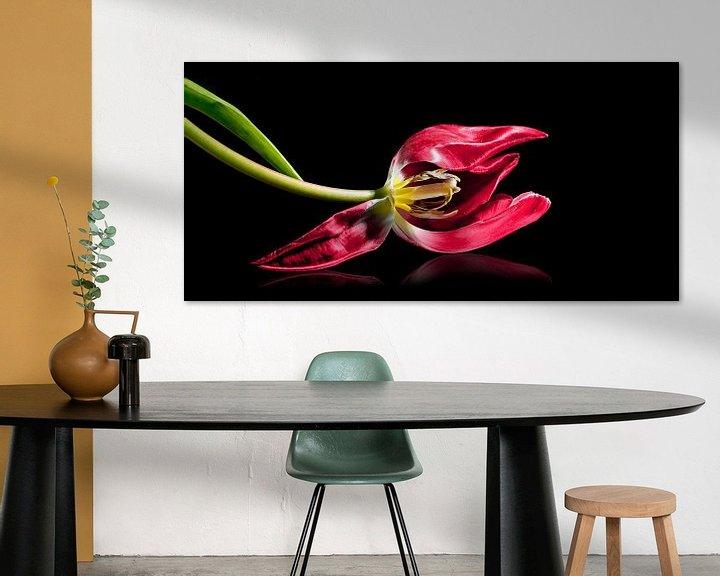 Impression: Tulipe rouge allongée avec étamine et pistil, isolée avec un petit reflet sur un fond noir, symbole  sur Maren Winter