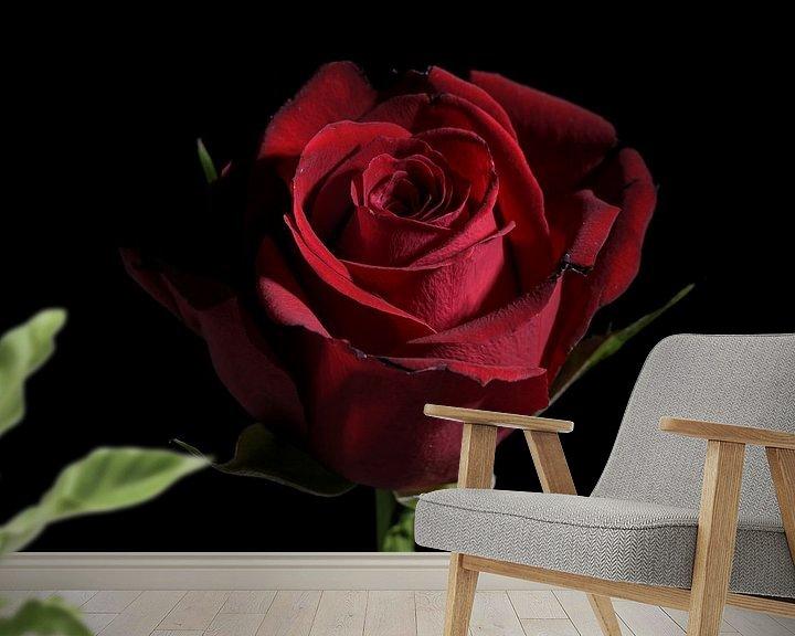 Impression: Fleur de rose rouge foncé sur fond noir avec espace de copie, symbole d'amour traditionnel, focus sé sur Maren Winter