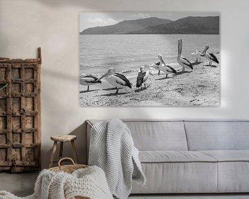 Pelican Break von DsDuppenPhotography